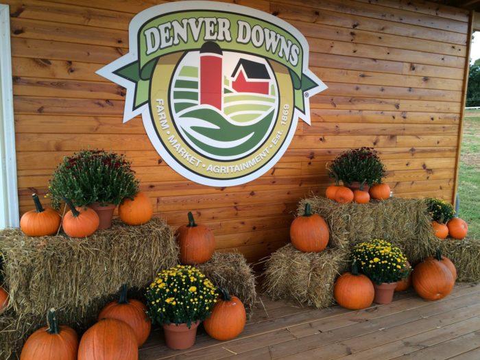 2. Denver Downs Corn Maze - Anderson, SC