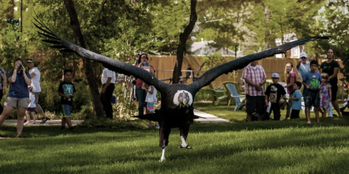 Seriously. Look at that wing span.