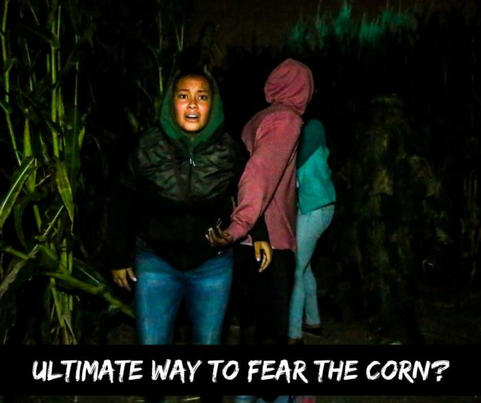 8 Awesome Corn Mazes Around Denver To Visit This Fall