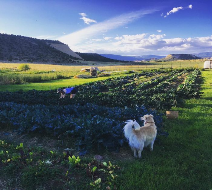 Hell's Backbone Grill has its own six-acre farm, where they produce organic vegetables, fruit, herbs and edible flowers.