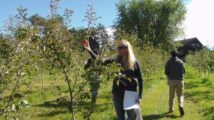 6.  Sadie's Apple Orchard, Georgia