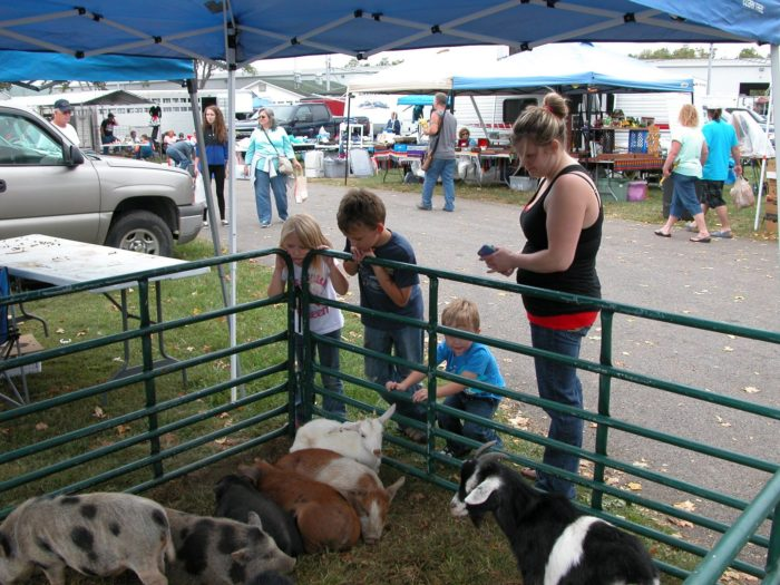 (And if you have kids, they'll likely want to stop and pet the live animals.)
