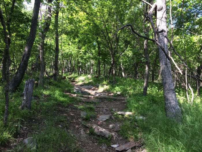 This 2.5-mile hike to the top is moderate, with some parts of the trail being bumpier or steeper than others.