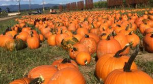 These 9 Charming Pumpkin Patches In and Around Portland Are Picture Perfect For A Fall Day