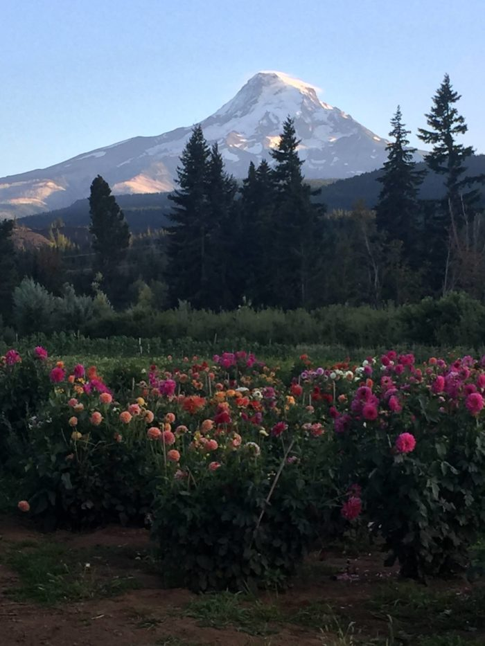 1. Mountain View Orchards