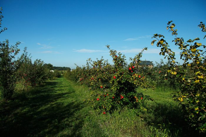 7. Cherry Hawk Farm (Marysville)