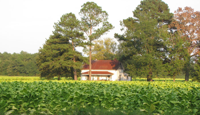 6. Assume we all live on a (tobacco) farm.