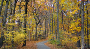 10 Picturesque Hikes For Fall Foliage In Rhode Island