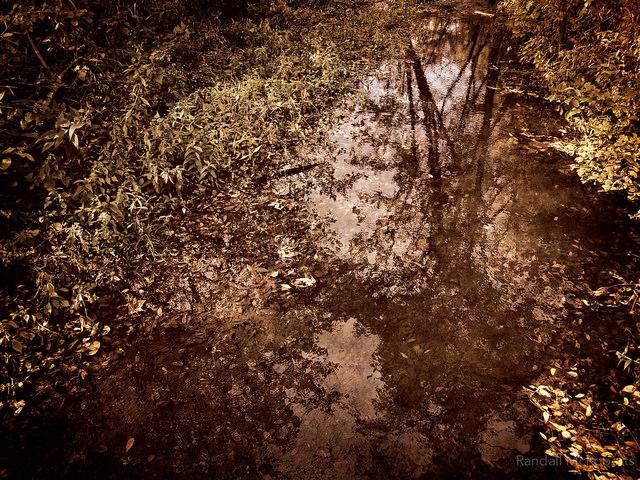 4. McCloud Nature Park - North Salem