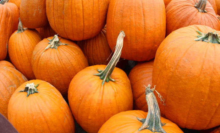 4. Marana Pumpkin Patch and Farm Festival (Marana)