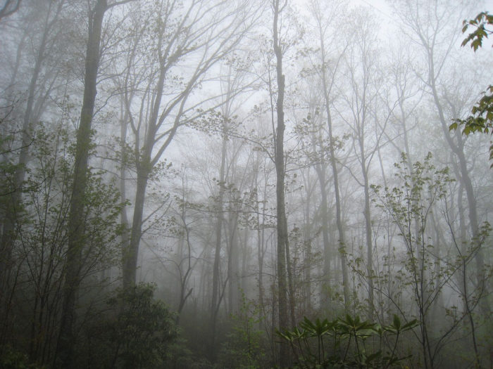 With the mist coming through the trees, you definitely get a creepy vibe here.