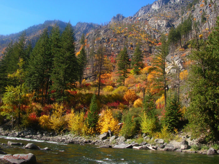 6. The fall colors along the Wenatchee River are simply stunning.