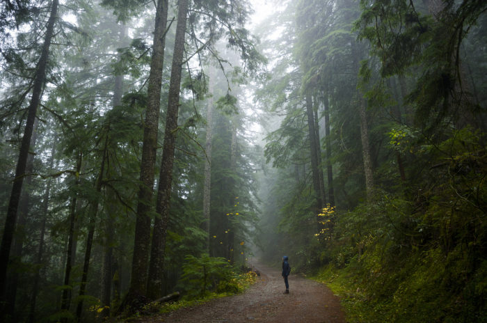 The hike begins on a gravel road that weaves through a beautiful old growth forest.