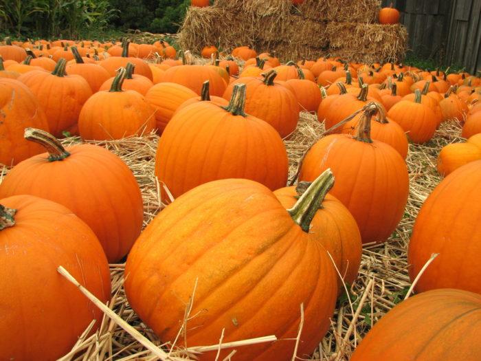 7. Half Moon Bay Art and Pumpkin Festival: Oct. 17 & 18