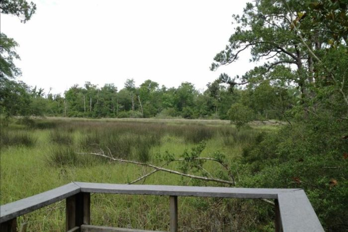 After completing the trail, head on over to the Visitors Center, where you'll find a picnic area with grills and access to another marsh overlook.