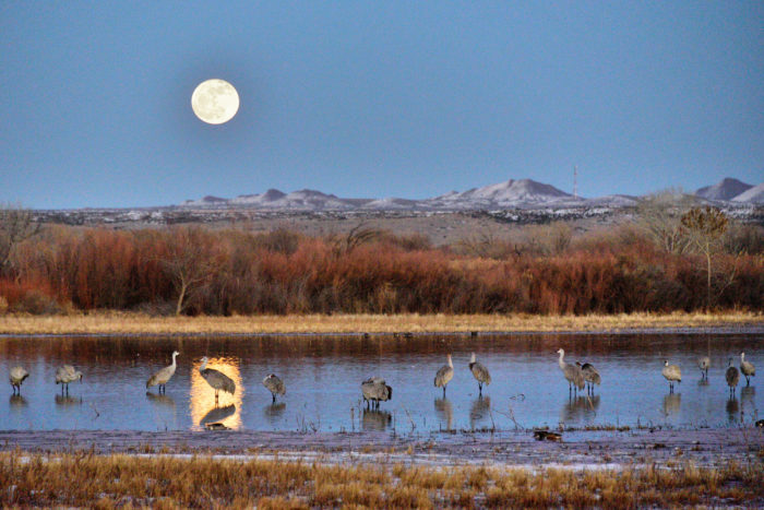 11. Experience Bosque del Apache National Wildlife Refuge.