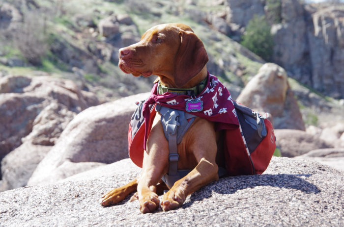 Even Fido will be in awe of the views.