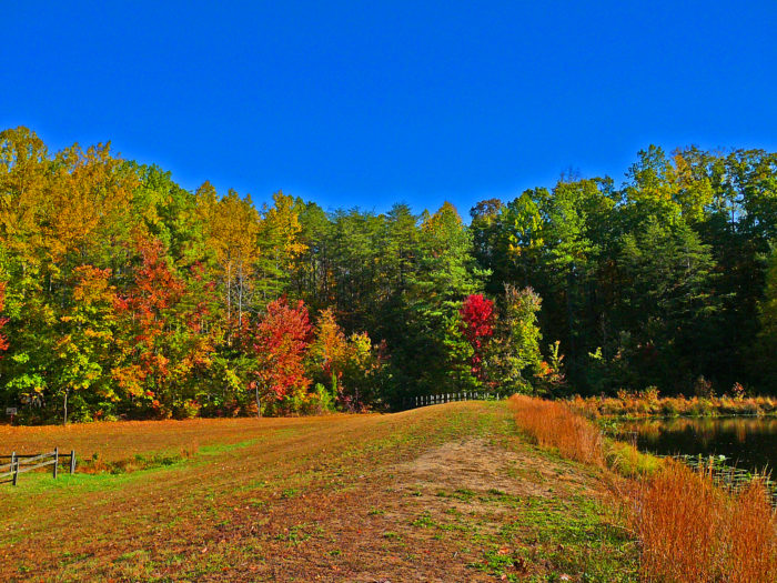 With a plethora of deciduous trees, Cedarville State Forest is at its best during autumn.
