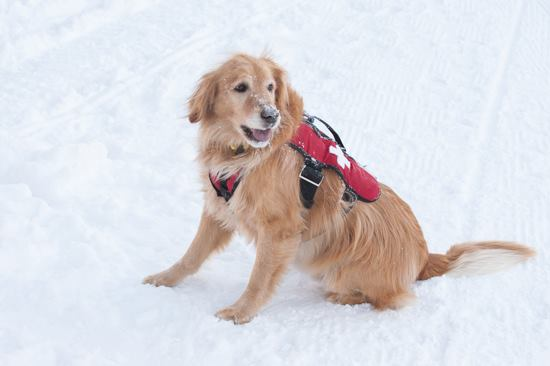 4. Our best looking, brightest pups live at Utah's ski resorts.