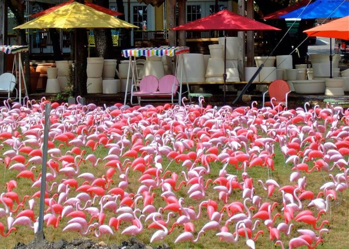 7. You loved the field of pink flamingos in front of the garden shop on the corner of Bee Cave Rd and Loop 360.