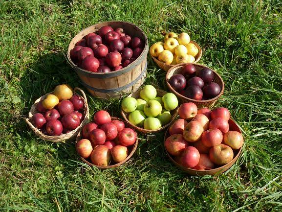 2.  Norman's Orchard – Tarentum