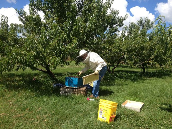 2. High Hill Orchard, Henderson