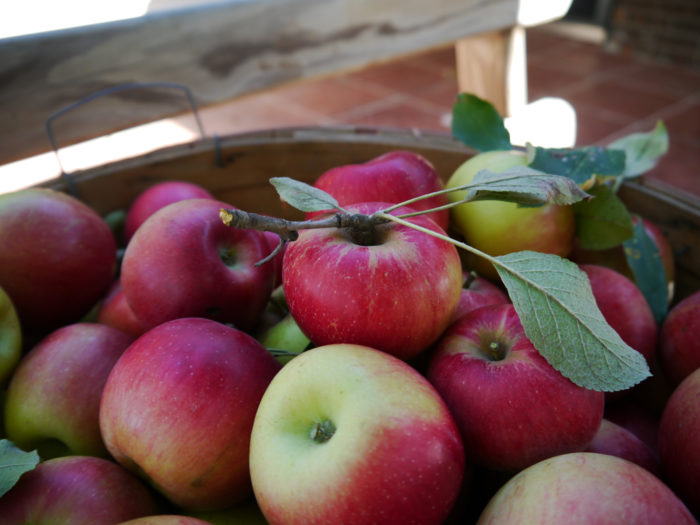 1. Bluewater Orchard, Fromberg