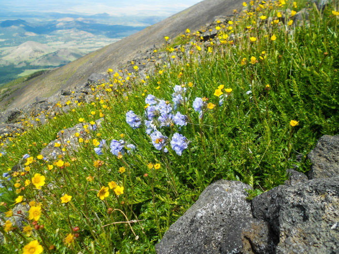 The plant life you'll find up here includes delicate shrubs, flowers, and other small plants that can survive the rocky terrain and extreme conditions here.