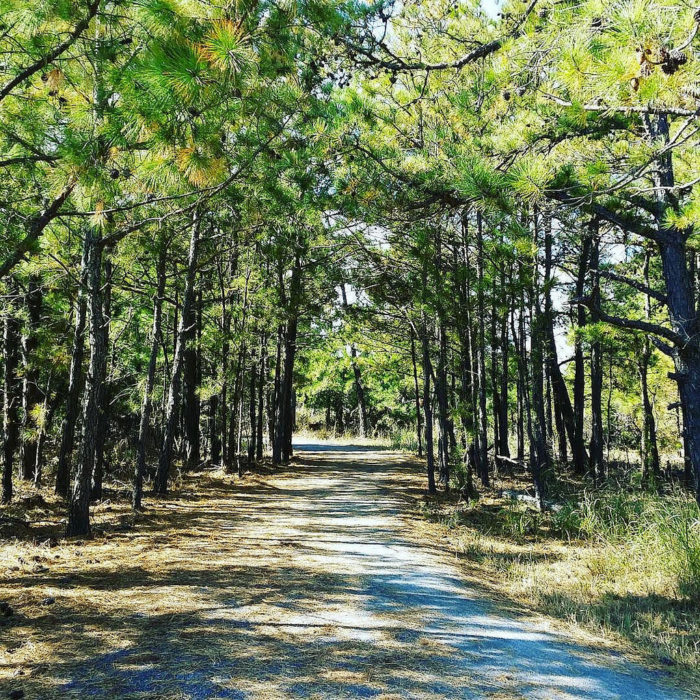 Parts of the trail wind through forested park land on sandy soils.