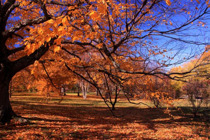 Arnold Arboretum, Jamaica Plain