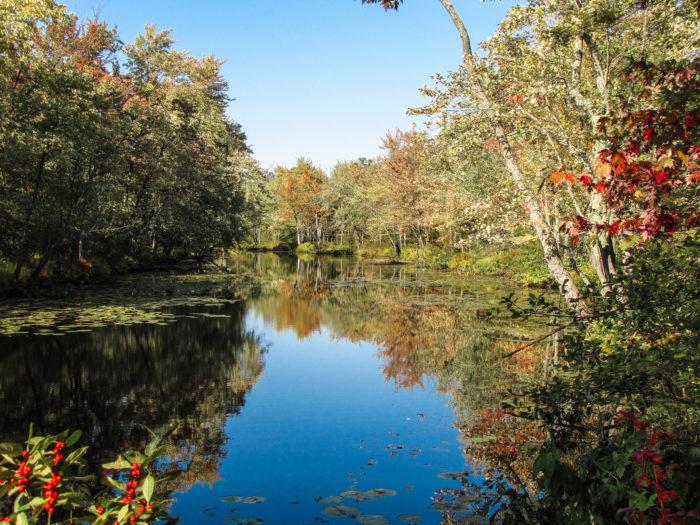3.  Black Creek and Maquam Creek Trails, Swanton