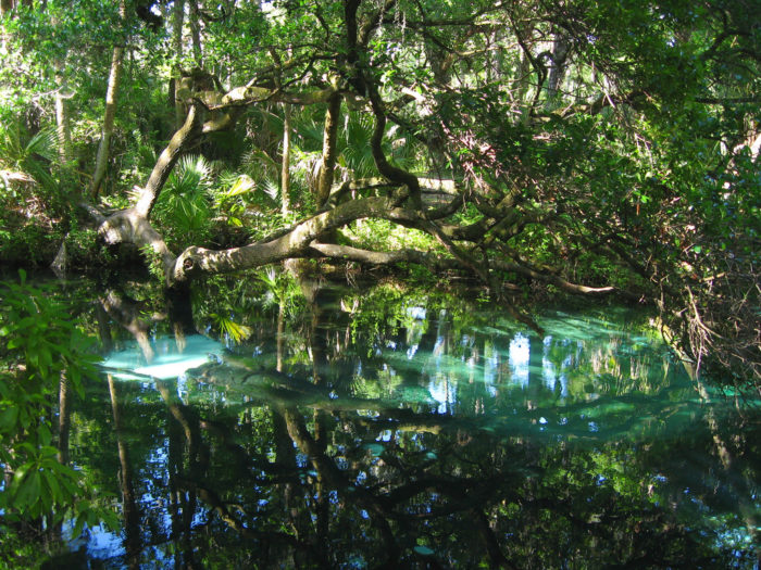 "Just a short half-mile walk from Juniper Springs will lead you to the picturesque Fern Hammock Springs, which is nicknamed ""The Aquarium,"" for the constantly bubbling boils under the surface of the clear blue water."