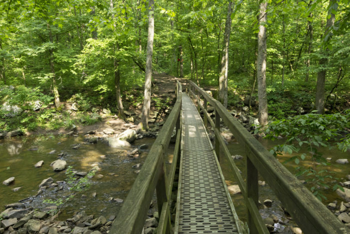 This adorable footbridge invites you to explore the forest beyond it.