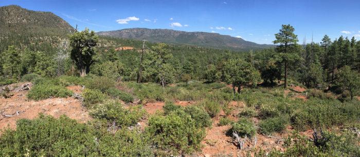 7. Pine-Strawberry Trail #15