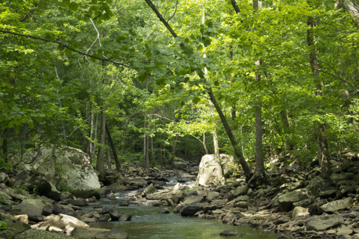 No one should underestimate the beauty of an Arkansas creek cutting through a gorgeous, ancient forest.