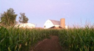 You'll Love These 11 Charming Farms Nestled In The Middle Of Nowhere In Ohio