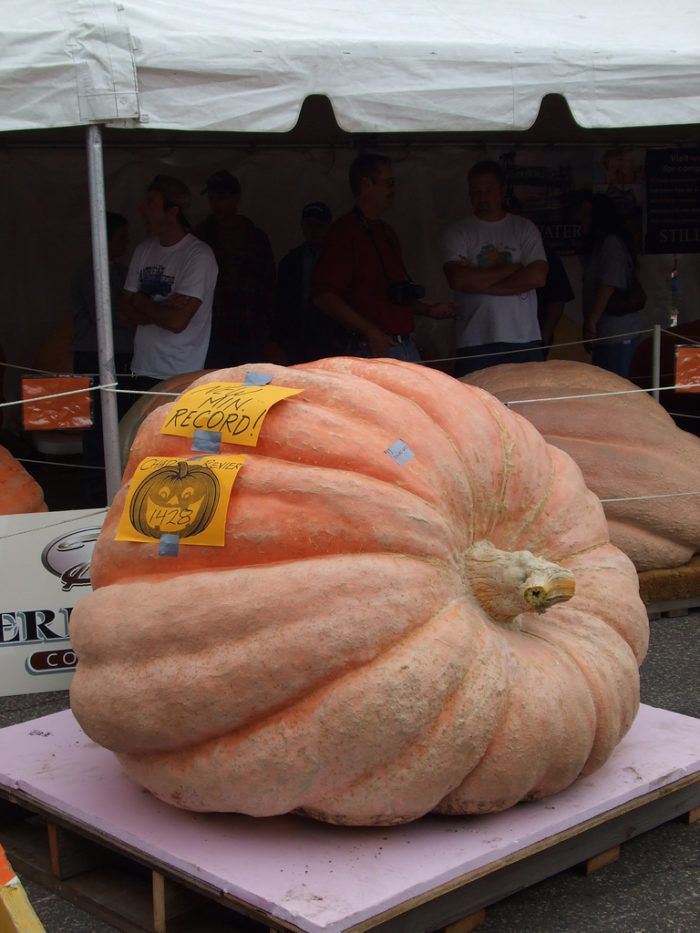11.  Stillwater Harvest Festival and Pumpkin Weigh-Off