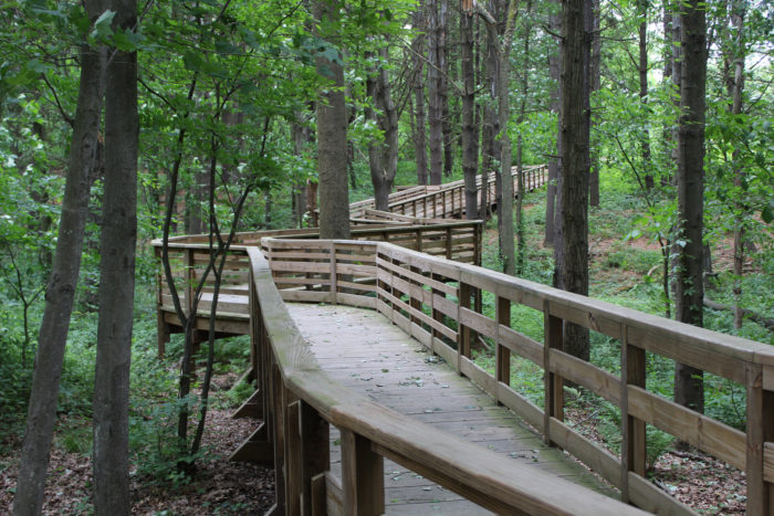 Walk the Fort River Birding and Nature Trail. It's an enchanting journey through peaceful woods.