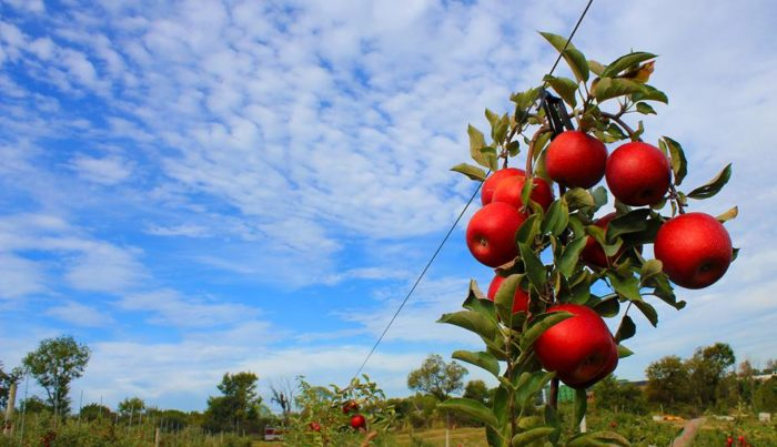 3. Soergel Orchards – Wexford