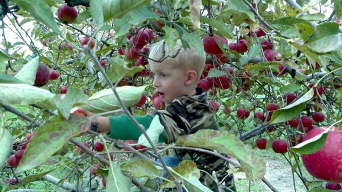 4. A & M Farm Orchard (Midland)