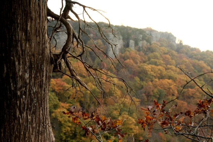 Enjoy the vibrant colors while you drive up to Arkansas's highest point, Mount Magazine.