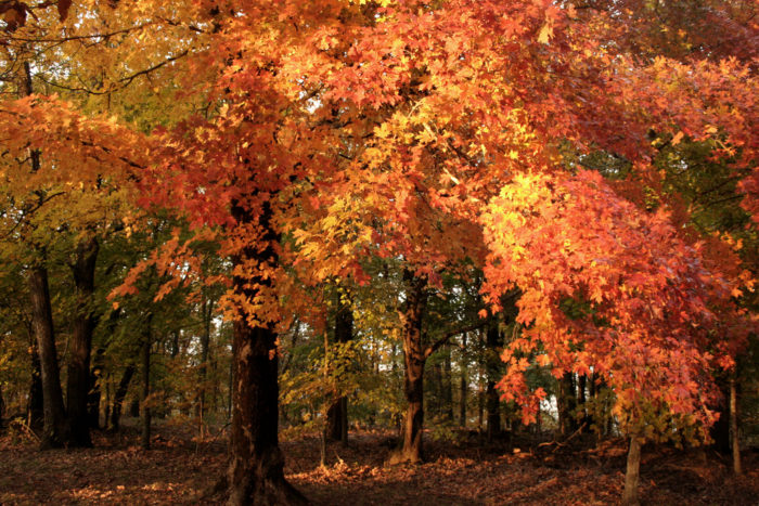 On Mount Magazine you're surrounded by a gorgeous forest all dressed up in shades of red and orange.