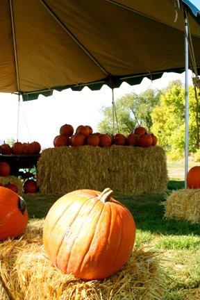 11. Harvest Festival, Wellsville