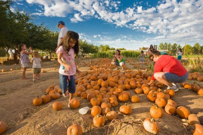 14. Schnepf Farms Pumpkin and Chili Party, Queen Creek