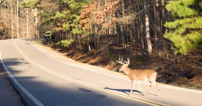2. While driving down a rural two-lane road, you've encountered a deer.
