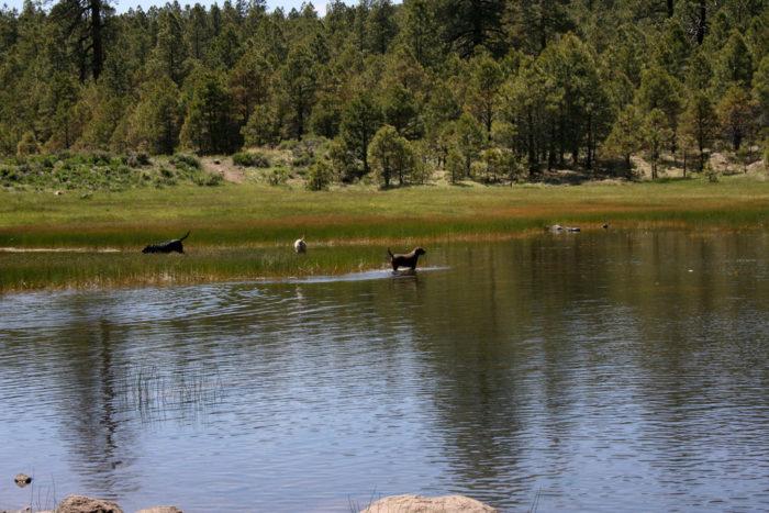8. Schultz Creek Trail #152