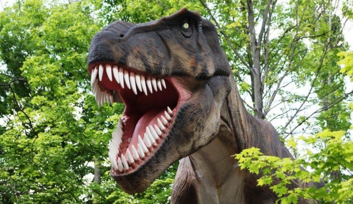 Many of us have been to Valleyfair for the rides, but lurking right behind the park entrance there is the Dinosaurs Alive! exhibit with more than 30 life-sized, moving animatronic dinosaurs!