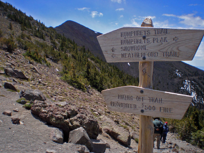 Access to the tundra and Humphrey's Peak can be done by hiking Humphrey's Trail, a 10-mile roundtrip from the Snowbowl, through the pines, up to the tundra, and finally to the top of the world (or state, in this case).