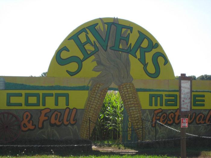 1. Sever's Corn Maze