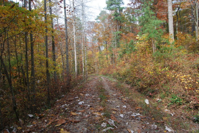 1. William B. Bankhead National Forest - Double Springs, AL